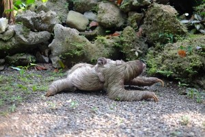 sloth-731297_640