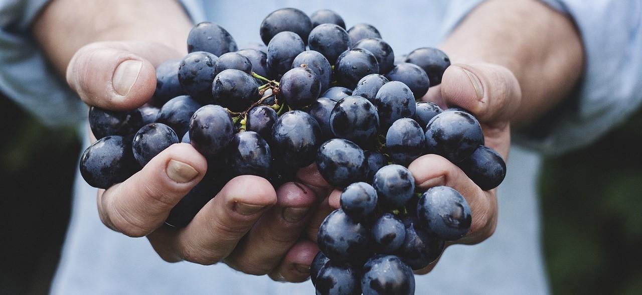 grapes-690230_1280.jpg