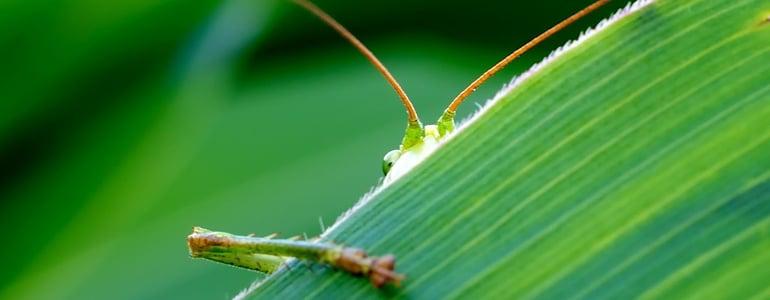 grasshopper-193721_1280.jpg