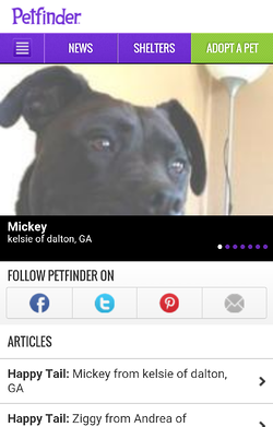 petfinder mobile optimization & responsive design social sharing buttons