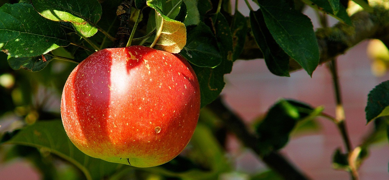 delicious inbound marketing fruit