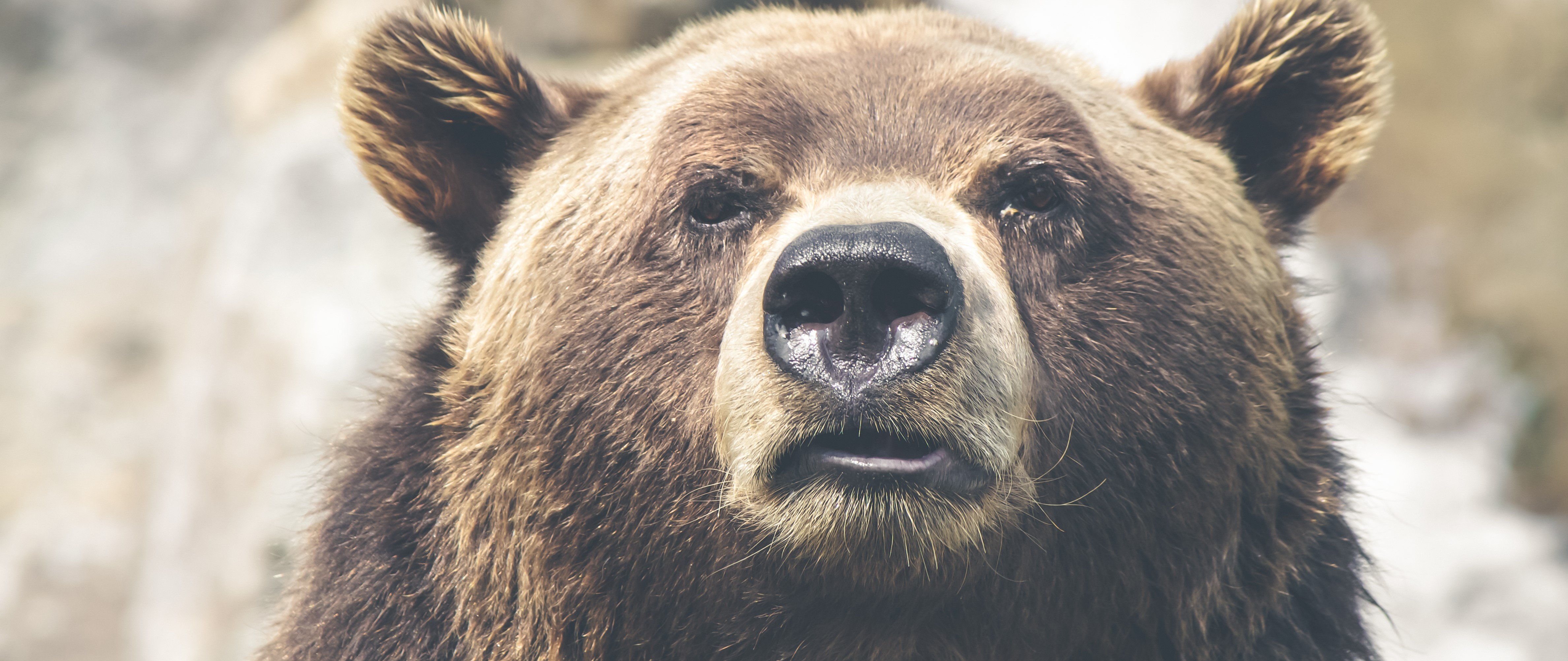 CEOs are like grizzly bears