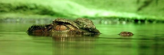 australia crocodile death