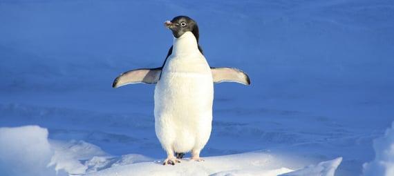 penguin-56101_1920_1.jpg
