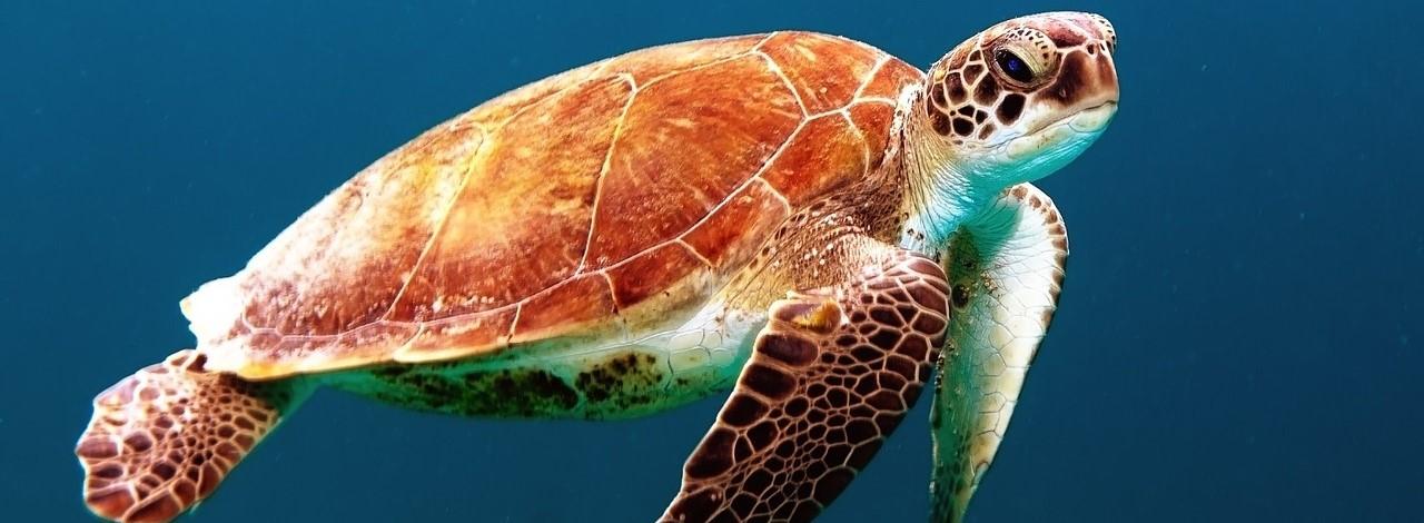 turtle-863336_1280_2.jpg