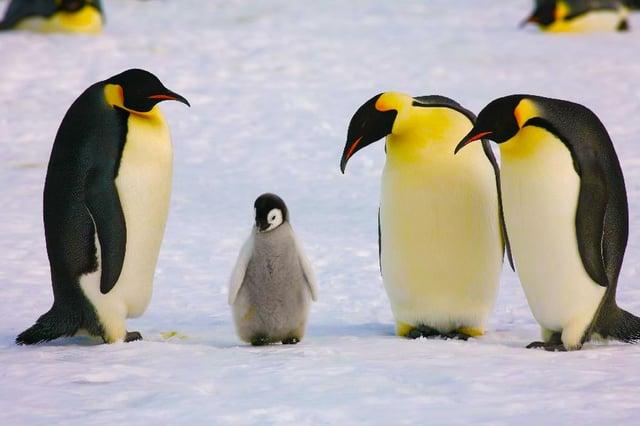 Penguin-4-0.jpg