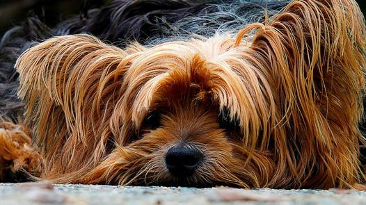 dog-200942_1280.jpg