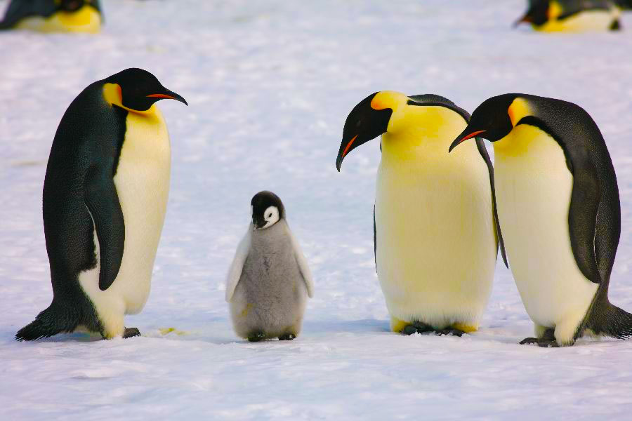 How Penguin 4.0 Impacts Small Business SEO