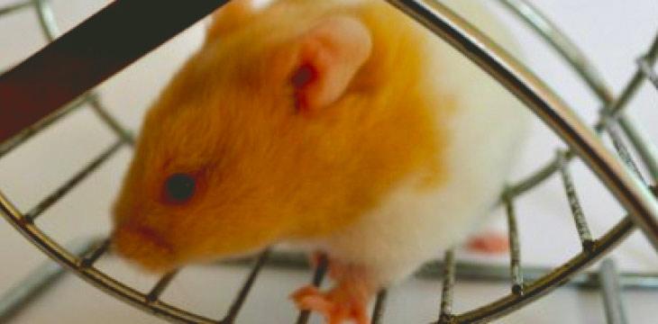 Jump Off the Website Redesign Hamster Wheel