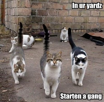 increase brand awareness cat_gang.jpg