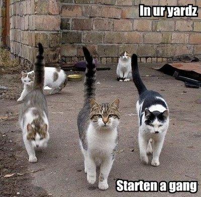 increase brand awareness cat_gang.jpg